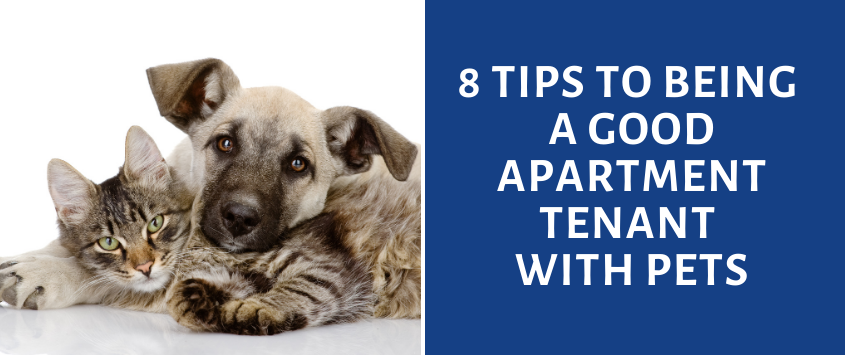 8 Tips to Being a Good Apartment Tenant with Pets
